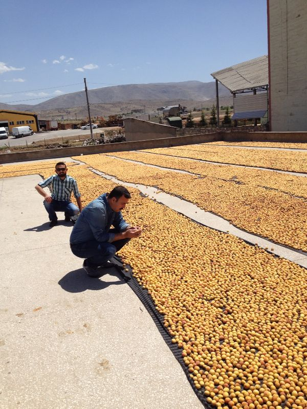 Me-and-my-uncle-Yılmaz-are-checking-the-fruits-layed-for-sun-drying-2014-season.jpg