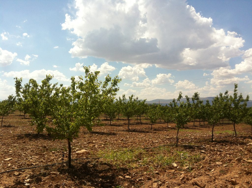 Orchard-Vİew-3.jpg